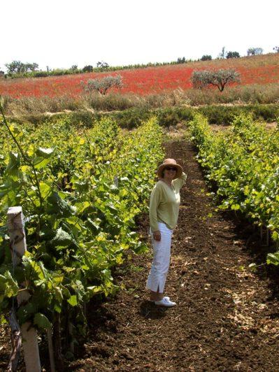peggy-poppies-vines