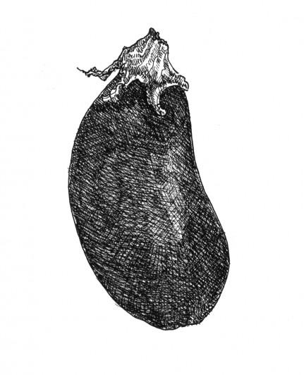 Illustration eggplant