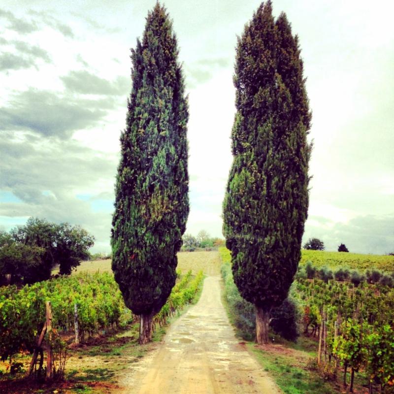 trees tuscany
