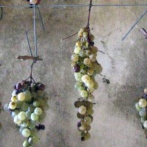 Tuscany, Italy - Peggy Markel's Culinary Adventures