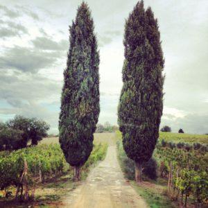 cypress chianti Italy thumb