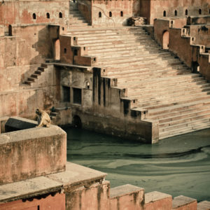 Pond With Stairs And Monkey. Mathura, Birthplace Of Lord Krishna. India